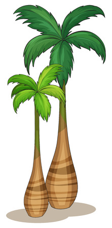 Illustration of close up palm trees Vector