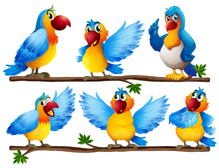 cartoon parrot: Illustration of many parrots on vine