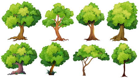 green and white: Illustration of a set of trees Illustration