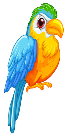 Illustration of a close up parrot Vector