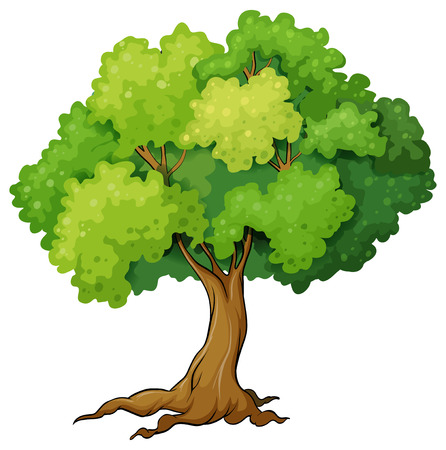 tree bark: illustration of a close up tree