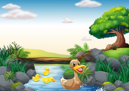 pato caricatura: ilustración de patos nadando en el río Vectores