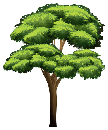 illustration of a close up tree Vector