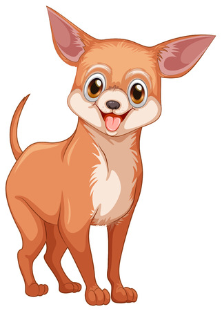 chihuahua puppy: Chihuahua dog illustration on white Illustration