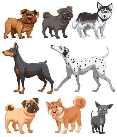 Dog and puppy collection on white Vector