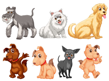 poodle: Dog collection on white background