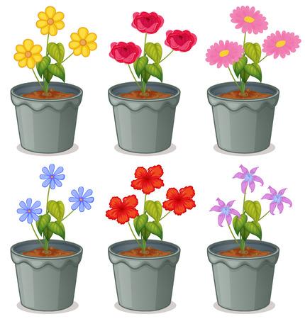 flor caricatura: Variedad de flores en macetas