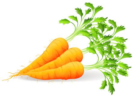zanahoria caricatura: Zanahorias nutritivas sobre un fondo blanco