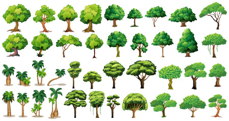 Diversity of trees set on white