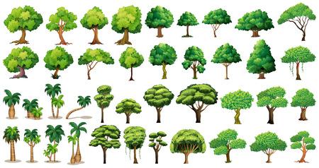 Rozmanitost stromů set na bílém