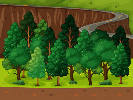 recursos naturales: Un largo y sinuoso camino en el bosque