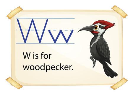 Poster of an alphabet W Vector