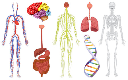 cartoon science: Illustration of human orangs and DNA