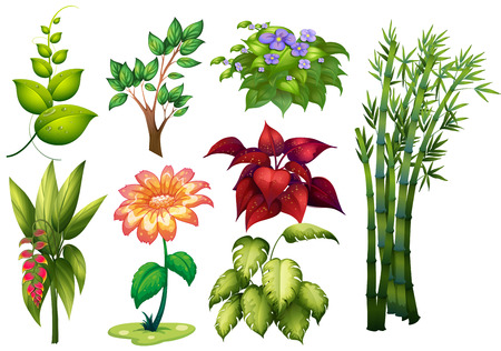 vine  plant: Illustration of different kind of plant and flower
