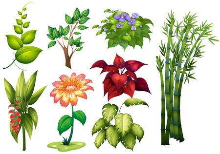 platano caricatura: Ilustración de diferentes tipos de plantas y flores