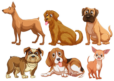 pug dog: Illustration of different type of dogs