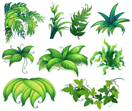 Illustration of different kind of plants Vector
