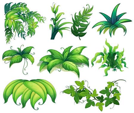 Illustration von verschiedenen Arten von Pflanzen Standard-Bild - 34641107
