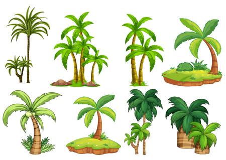 boom: Illustratie van de verschillende soorten palmen Stock Illustratie