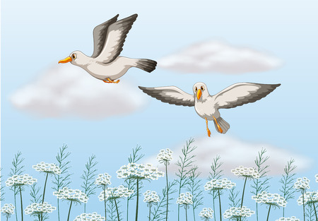 Two seagulls flying in the air Vector