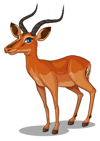 gazelle: Illustration of a close up gazelle