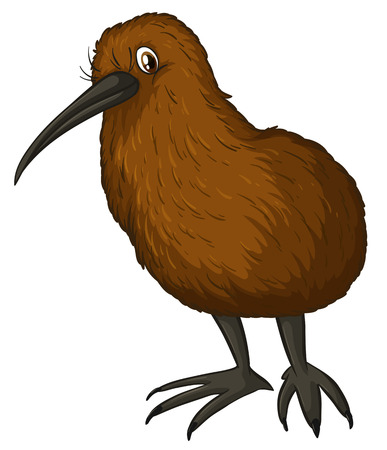 flightless bird: Illustration of a close up kiwi bird Illustration