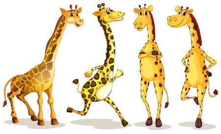 Ilustración de diferentes poses de jirafa