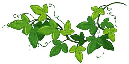 Illustratie van een close-up klimop