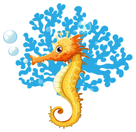 sea horse: A seahorse underwater on a white background