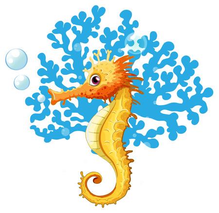 caballo de mar: Un caballito de mar bajo el agua sobre un fondo blanco