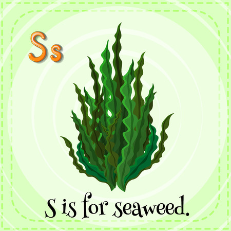 linguistic: Illustration of an alphabet S is for seaweed