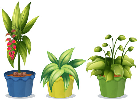 Illustration of different potted plant
