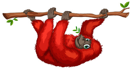 endangered: Illustration of an orangutan hanging on a branch
