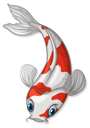 exotic fish: Illustration of a close up koi Illustration