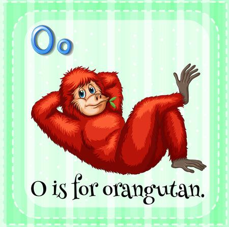 orangutan: Illustration of an alphabet O is for orangutan Illustration