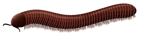 Illustration of a small millipede Vector