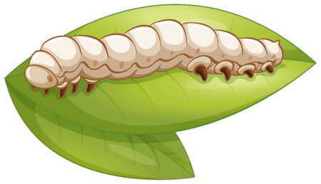Illustration of a silkworm on a leaf Çizim