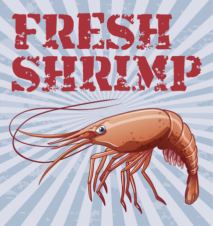 Illustration of a poster with fresh shrimp Vector