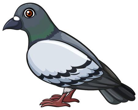 oiseau dessin: Un pigeon sur un fond blanc Illustration