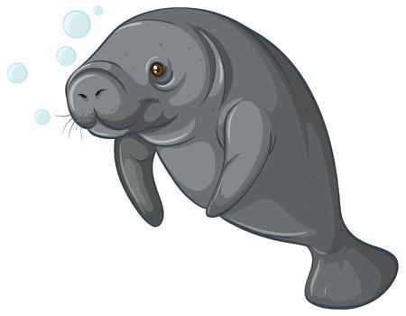 sea cow: Illustration of a close up sea cow