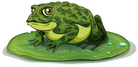 exotic frog: Illustration of a close up frog