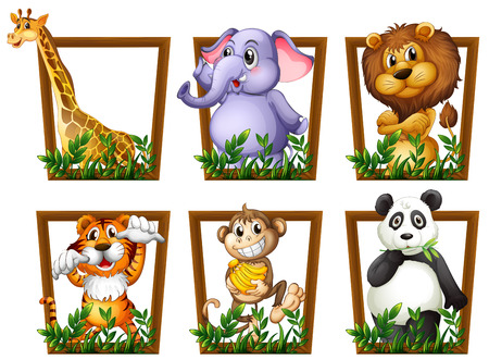 cartoon zoo: Illustration of many animals in a wooden frame