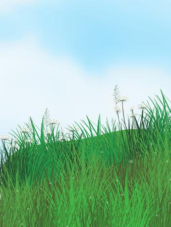 hoog gras: Illustratie van een veld met hoog gras