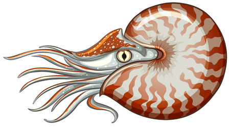 exotic fish: Illustration of a close up sea animal