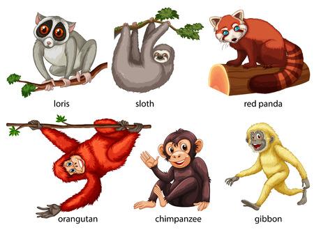 oso perezoso: Ilustración de diferentes tipos de animales Vectores