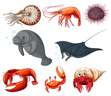Illustration of different types of sea animals