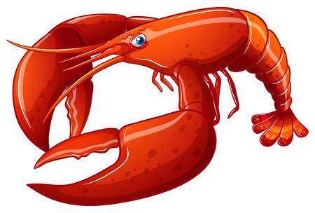 Illustration of a close up lobster