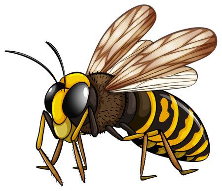 間近でハチのイラスト