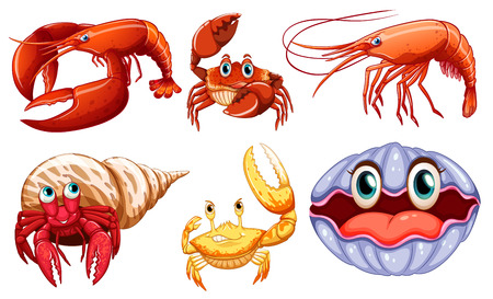 prawn: Illustration of different sea animals