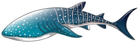 ヘラクレスジンベイザメ間近のイラスト